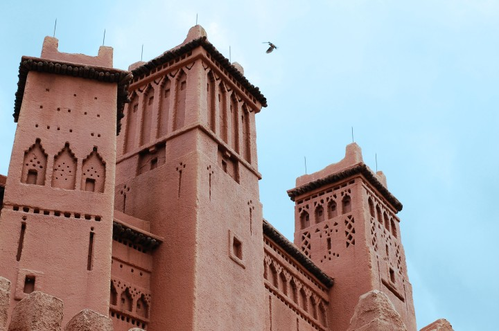 Morocco building bird